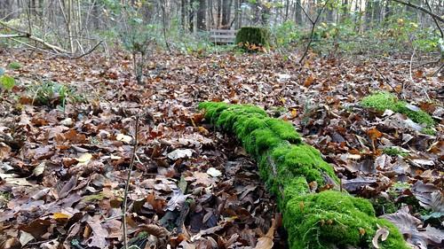Ober-Olmer Wald