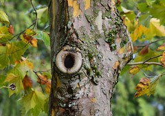 (careth@2012) Tags: tree leaves autumn fall nature scenery scene scenic view trunk treetrunk branches