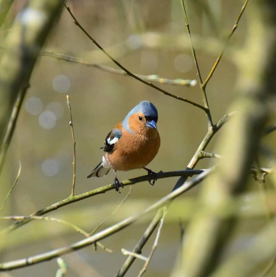 Bird parliment essay