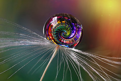 Dragons tail (Tony's emporium) Tags: drop dandelionseed macro colour clarity water waterdrop fractal pattern refraction