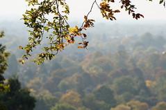 Richmond Park (jiving John) Tags: wisy walk riverthames richmond barnes