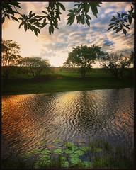 (Jos Mauricio Garijo) Tags: paisagemrural landscape pordosol estnciaboavista entardecer lago celular fotografiajmauriciogarijo borebisp josmauriciogarijo natureza rvore tree luz sky fotoarte instagram