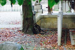 Today's Cat@2016-11-03 (masatsu) Tags: cat thebiggestgroupwithonlycats catspotting pentax mx1