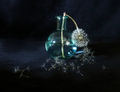 Broken (PrunellaCara) Tags: dandelion seedhead stilllife blue vase glass 0bjects