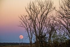 Supermoon Rising 2 (denny.weinmann) Tags: lawrenceks earth explore lfk moon moonrise november photography sonya6000 sonyalpha sonyimages supermoon travel