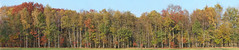 Panorama autumn forrest (Stan de Haas Photography) Tags: panorama autumn fall tree forest park view red outdoor warm silence peace seasonal yellow scenery orange grass maple november season flora october color wilderness colorful rural harmony golden background fade branch idyllic ground ecological wallpaper leaf bright environmental ecology vegetation september backdrop gold plant beautiful tranquility nature peaceful environment landscape standehaas