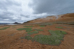 Green spots at Leirhnjkur (Chris@Issy) Tags: iceland islande vacation vacances travel voyage ile island chrisissy atempsperdu norurland eystra mvatn outdoors nature geothermie geothermal randonne leirhnjkur hike herbe verte green grass