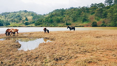 Da Lat (dolosan) Tags: dalat vietnam travel animal horse landscape lake