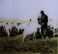 foto de pastor y rebaño de ovejas Museo del Bosque Parque Natural Sierra Urbion Soria 11 (Rafael Gomez - http://micamara.es) Tags: museo del bosque parque natural sierra urbion soria urbión foto de pastor y rebaño ovejas