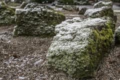 Erster Frost - 0031_Web (berni.radke) Tags: ersterfrost frost raureif wassertropfen rime eisblumen eiskristalle iceflowers icecrystals escarcha
