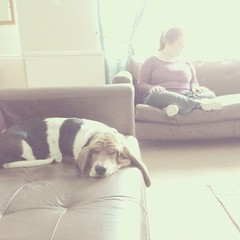Lazy, hazy morning. (L. McG.-E.) Tags: rosie bassethound uploaded:by=flickrmobile flickriosapp:filter=nofilter