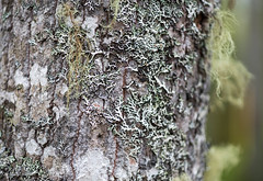 Tree Moss06 (Korona4Reel) Tags: trees lake canada tree green nature forest outside outdoors moss woods nikon forestry glen dirt bark treebark damp d800 moist nikond800 lakegeorgens koronalacasse koronalacassephotography korona4reel