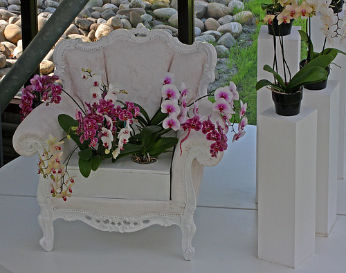 Chair with Orchids