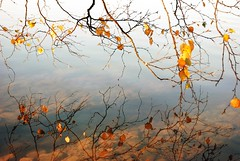 (Sameli) Tags: blue autumn lake nature water suomi finland landscape still silent view calm hush hvittrsk kirkkonummi