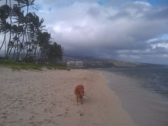 Dog walks on Kahala Beach (Eric Broder Van Dyke) Tags: dog beach walks oahu incredible driod kahala