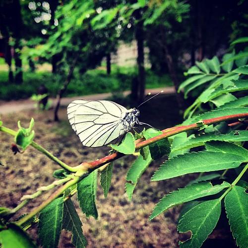 Butterfly in #kirovsk