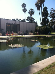 Lily Pond (ellemorgan) Tags: california pond sandiego waterlilies palmtree balboapark nymphaeaceae