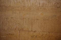 Tomb of Petosiris 23 (eLaReF) Tags: egypt tombs isadora hieroglyphs hieroglyphics ibex elgebel tunaelgebel petosiris tunaelgebbel