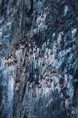 birdies (shinobi_no_sho) Tags: birds rock svalbard arctic wilderness spitsbergen colony spitzbergen