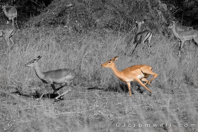 Zambia Animals