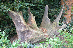 Ickworth House (scuba_dooba) Tags: uk england house home st gardens bury suffolk country national trust edmunds stately ickworth