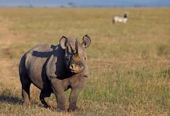 Watching You, Watching Me (AnyMotion) Tags: africa morning travel nature sunshine animal