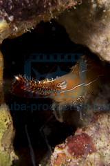 2013 11 VOISIN MALDIVES-1800