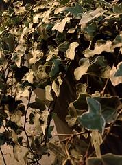 IMG_20150418_224558 (edelvia14) Tags: rouen nuit printemps nexus