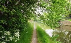 Down the cut (Birmingham Phil) Tags: canal bcn birminghamcanalnavigations