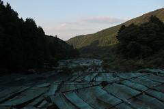 wasabi has taken over the river (Lammietjie) Tags: summer green japan river wasabi nihon natsumi