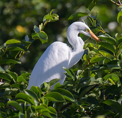 05-20-15-1287.jpg (Lake Worth) Tags: bird nature birds animal animals canon wings florida wildlife feathers wetlands everglades waterbirds southflorida birdwatcher 2xextender sigma120300f28dgoshsmsports