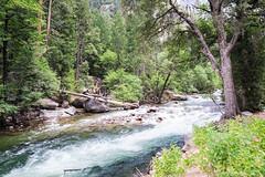 Merced River (Electricity Mule) Tags: california nationalpark unitedstates yosemite yosemitenationalpark yosemitevalley ynp geo:state=california geo:city=yosemitenationalpark geo:country=unitedstates exif:isospeed=800 camera:make=nikoncorporation camera:model=nikond700 exif:make=nikoncorporation exif:model=nikond700 exif:lens=00mmf00 geo:lat=37732063174382 geo:lon=11955862982483