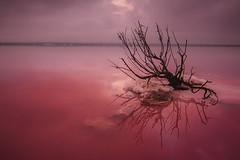 salinas (adelayanto) Tags: salinas color amanecer reflejo rojo