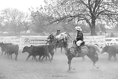 Juegos de aparte (Diego Serra) Tags: games horses cows arreo aparte campero caballos byn