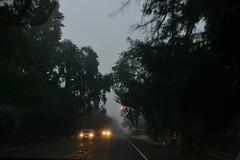 early morning drive (spitting venom) Tags: santarosa fog mist headlights carheadlights travelinginfog trees carsontheroad spooky
