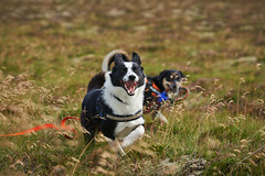 28august_Hringur&Venus_lastPlay_129 (Stefán H. Kristinsson) Tags: hringur venus august 2016 play leikur last reykjanes patterson iceland ísland