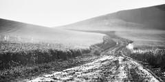 Never Found Our Way (John Westrock) Tags: blackandwhite road landscape rural farmfield washington pacificnorthwest canoneos5dmarkiii canon135mmf2lusm