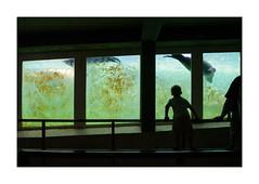 Habitat II. Copenhagen Zoo, Denmark (2006) (csinnbeck) Tags: seal zoo seals boy window glass canon eos 350d 1740mm 1740l watching