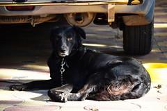 yes?! (R. S.) Tags: dog canine black mood shine