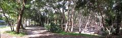 IMG_3075_81 stitch Bush camp pano (spelio) Tags: treachery camp nsw campsite