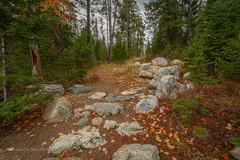 The trail (scepdoll) Tags: phelpslake grandtetonnationalpark wyoming rockefellercentre moosewilsonroad aurancesrockefellerpreserve
