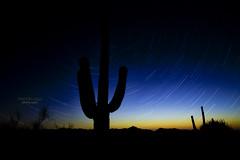 night in the desert (mariola aga) Tags: desert cactuses night sky stars startrails silhouette