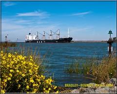 African Raven 1540 LR (bradleybennett) Tags: cargo vessel ship shipping delta water river ocean tanker antioch port stockton african raven africanraven