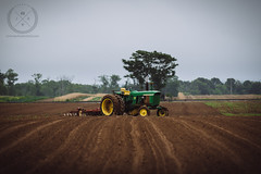 June 29, 2016-JDS_9998-web (Jon Schusteritsch) Tags: jon schusteritsch long island north fork 2016 li ny jschusteritsch nofo northforker jamesport farm morning tractor johndeere