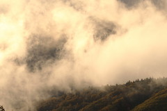 Afternoon light (Teruhide Tomori) Tags: landscape sky clouds forest tree nagano japan field nature wetland            autumn  norikura mountainside cloud mist