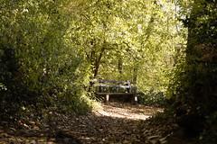 Lonely bench (sergejjovanovic77) Tags: fruska gora wood path leaves autumn bench foliage forest