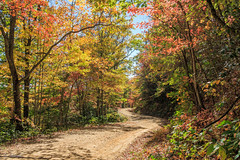 Logging Road in October (bee.shepard) Tags: landscape landscapes scenic scenics trees forest rural rustic road dirt country countryside autumn autumnal fall color appalachia nature nc northcarolina asheville woods