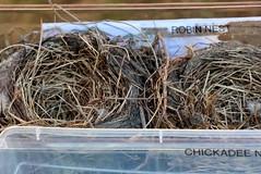 (Delta Naturalists Casual Birding) Tags: starrynight deas dncb