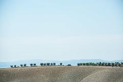 TuscanyUmbria-1032