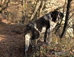 Mastik (bulbocode909) Tags: chiens nature forts arbres automne